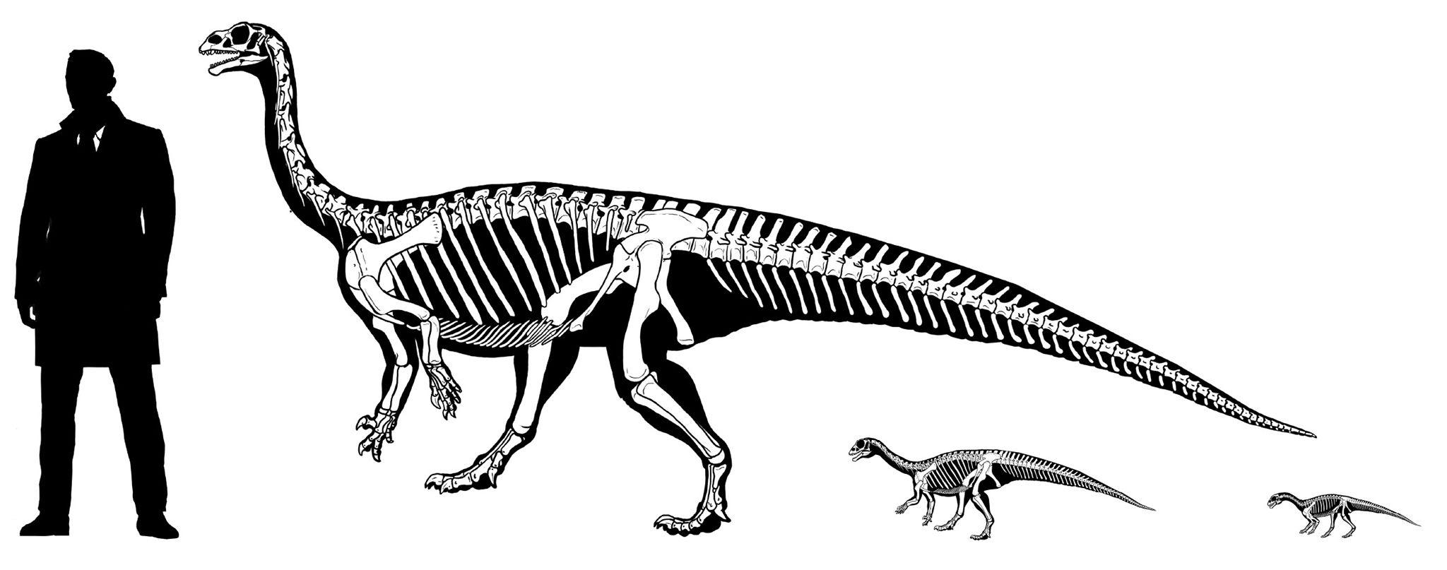 Wie ein Mensch: Dinosaurier lief erst auf vier, dann auf zwei Beinen