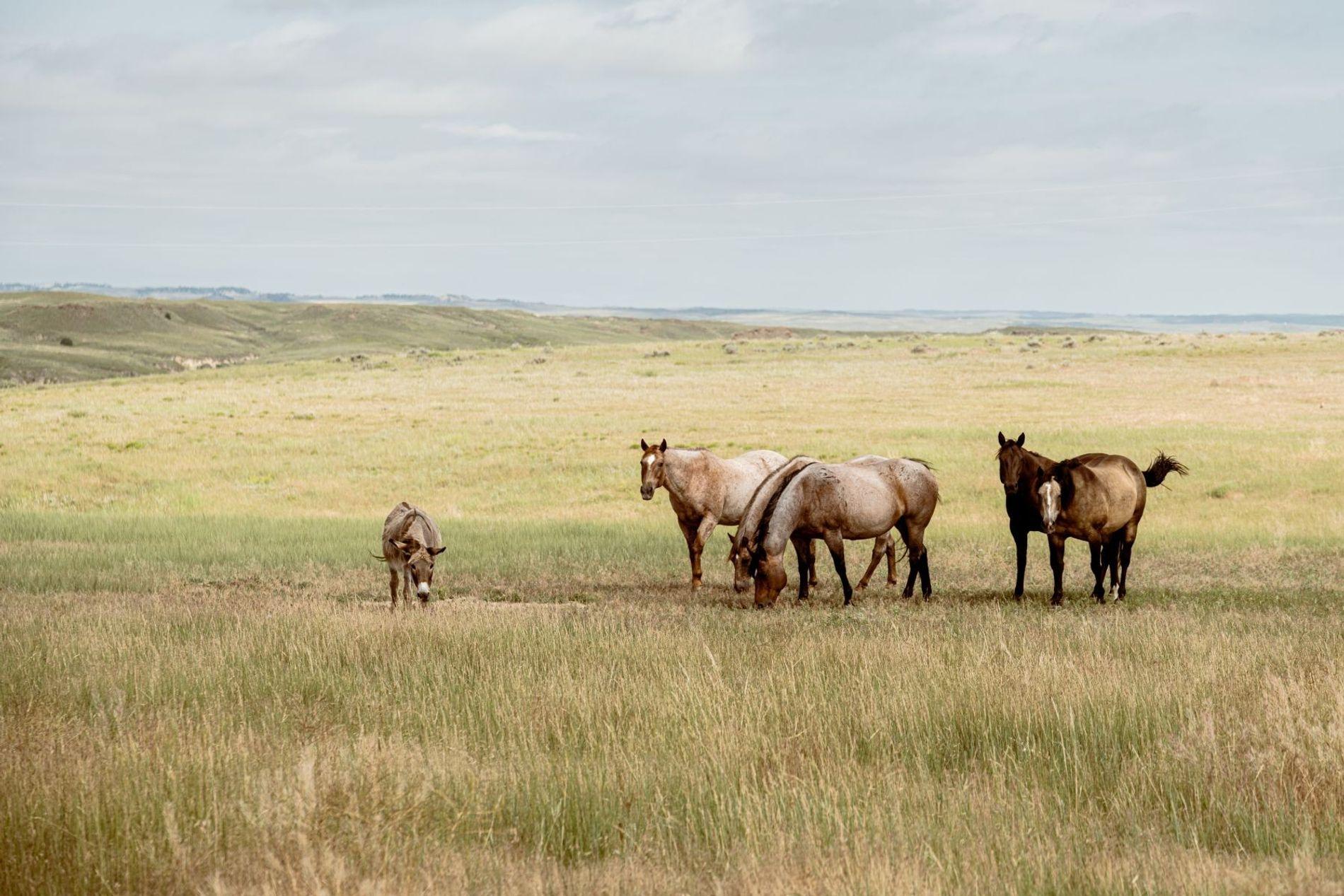 Pferde und Esel sind das ganze Jahr auf der Weide.