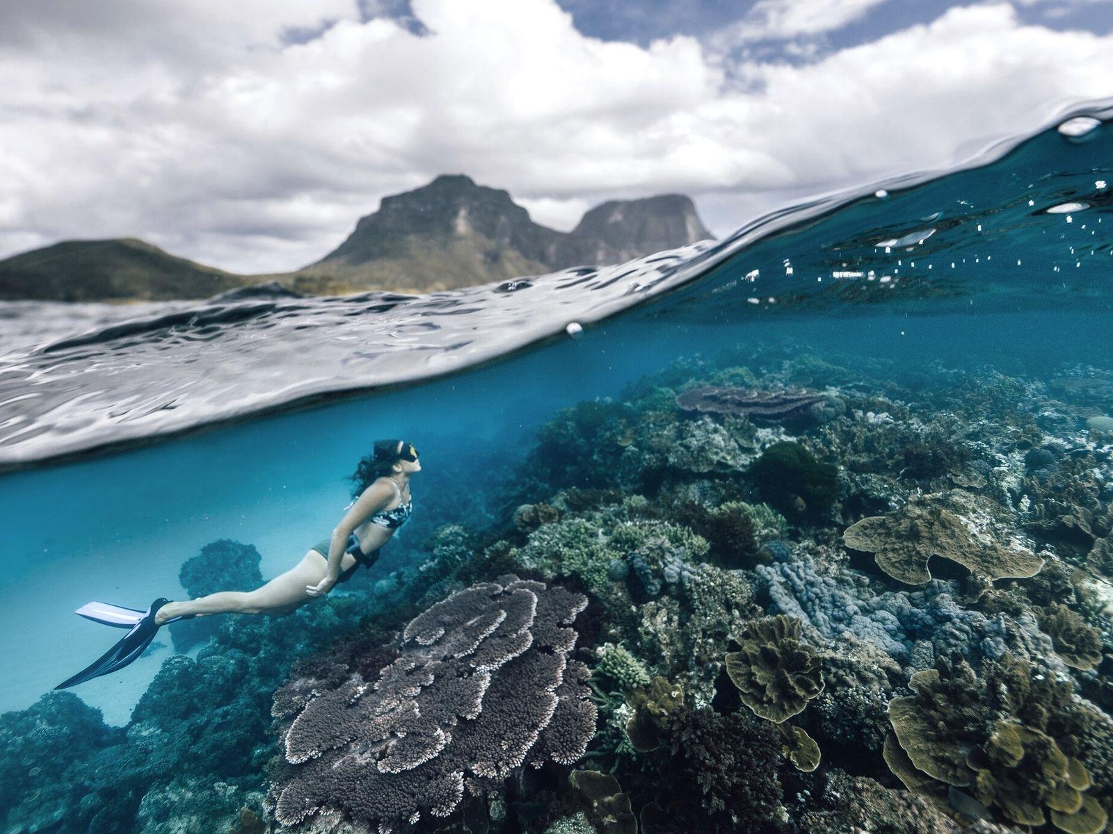 Ein Taucher erkundet die Korallenriffe rund um Lord Howe Island. Die vulkanische Insel, die sich in ...