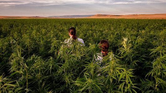 Einblicke in die blühende und widersprüchliche Marihuana-Industrie Italiens