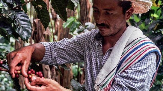 Don Fernando, ein Farmer aus Caquetá, blieb dem Kaffeeanbau treu, obwohl er in einer Region lebt, ...