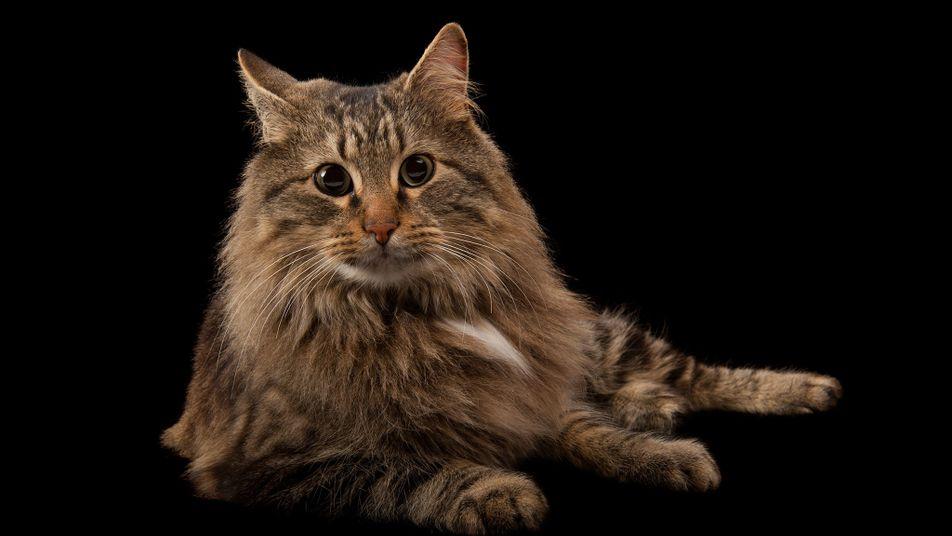 Warum Hunde Exkremente fressen und Katzen Druckertinte ablecken