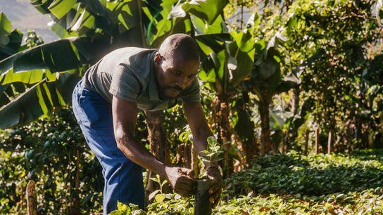 Zachariah Mukwinya, ein Kaffeefarmer aus dem Dorf Chavhanga im Distrikt Mutasa, hat miterlebt, wie das Wissen ...