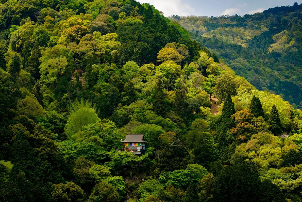 Versteckt in den Bergen Kyotos befindet sich ein kleiner buddhistischer Tempel. Der Goshiki-Maku, der bunte Vorhang ...