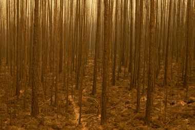 Verbrannte Bäume und verkohlte Erde nach einem Waldbrand entlang der Straße zwischen Byas-Kyuyol und Kobyay in ...