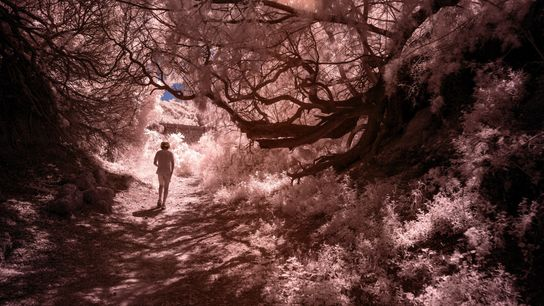 Mallorcas malerischer Strand Ca los Camps liegt in der Nähe eines Waldes, der Megalithen aus der ...