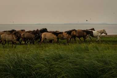 Pferde werden am Ufer des Taryn Kyuyel-Sees in Sacha vom Rauch der Feuer eingehüllt.