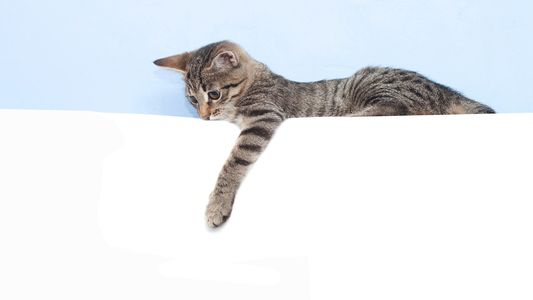 Auch Katzen sind Links- oder Rechtshänder