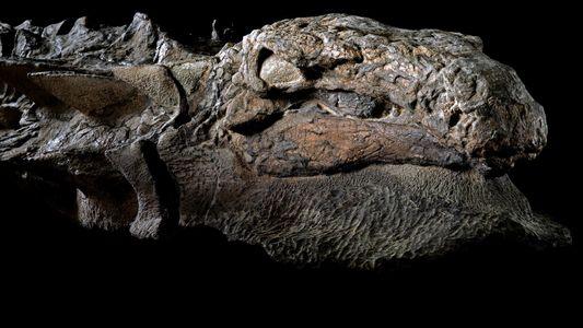 Galerie: Beeindruckendes Dinosaurierfossil gehört einer neuen Art an