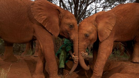 Warum erkranken Elefanten so selten an Krebs?