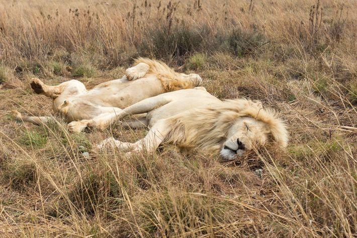 Helle Löwen