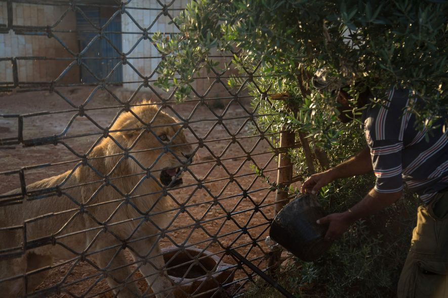 Eine gewagte Rettungsmission der Tierschutzorganisation Vier Pfoten rettet die 13 letzten Tiere aus Magic World, einem ...