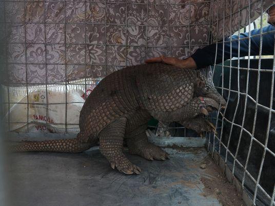 Tierrettung im Amazonas: Überlebende im Flammenmeer