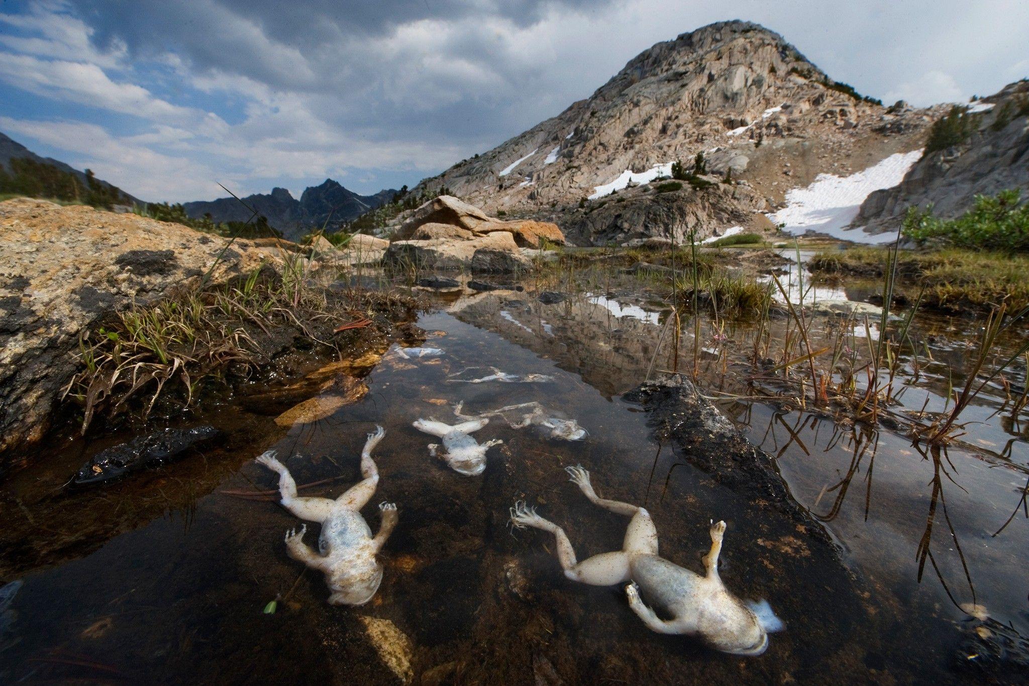 90 Arten verschwunden: Zwischenbilanz des Amphibiensterbens