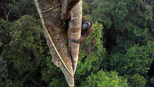 High Life im Tierreich – 19 Momentaufnahmen