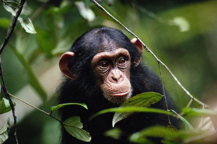 Social Distancing im Tierreich