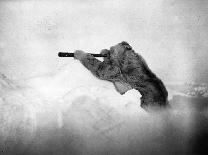Während seines dritten Versuchs, den Nordpol zu erreichen, sucht Admiral Robert E. Peary 1909 den Horizont ...