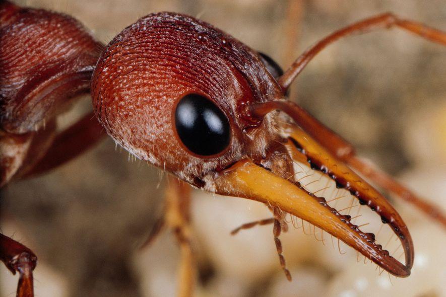 Insektenwelt: Wenn Königinnen zu Bestattern werden