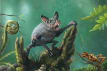 Eine künstlerische Darstellung der Großen Neuseelandfledermaus (Mystacina robusta), die in den 1960ern ausstarb. Das neu entdeckte ...