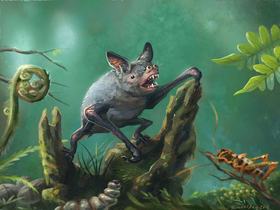 Riesiges Leichtgewicht: Prähistorische Fledermaus jagte am Boden