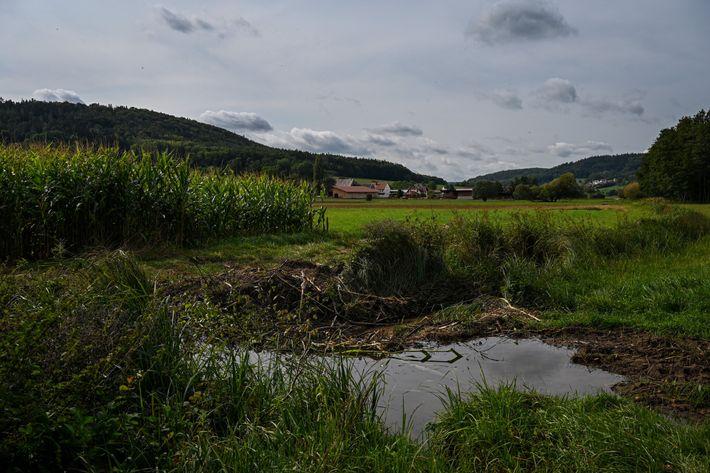 Nach dem neuen Biodiversitätsgesetz müssen bayerische Landwirte einen fünf Meter breiten, ungepflügten Streifen zwischen ihren Feldern ...