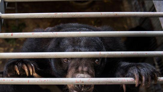 Bär auf Bärenfarm