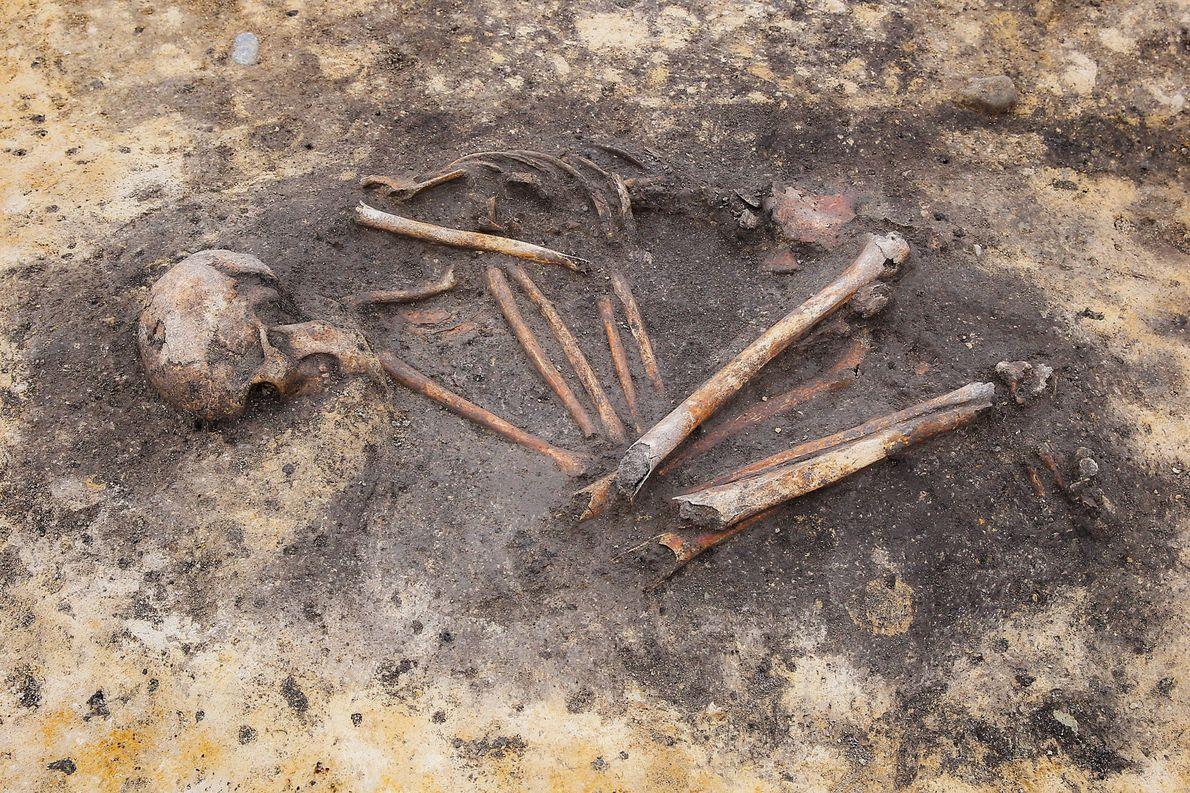 DNA-Studie: Soziale Ungleichheit im bronzezeitlichen Deutschland