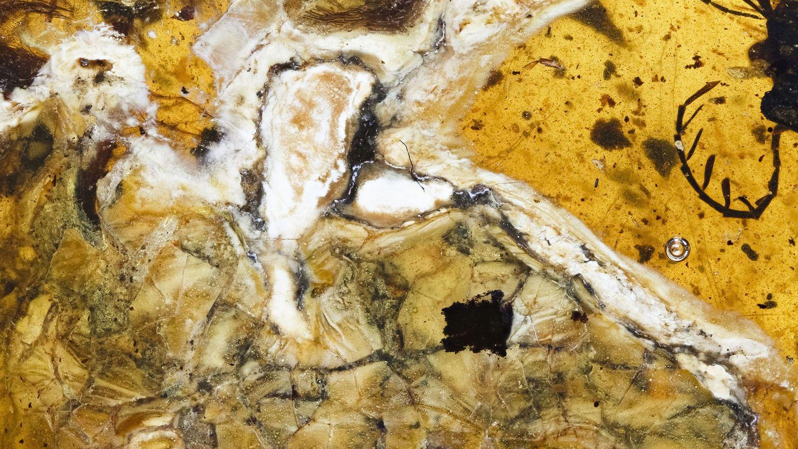 Diese Nahaufnahme zeigt den Kopf des Vogels und seinen Brustkorb mit freigelegten Knochen und Weichgewebe.