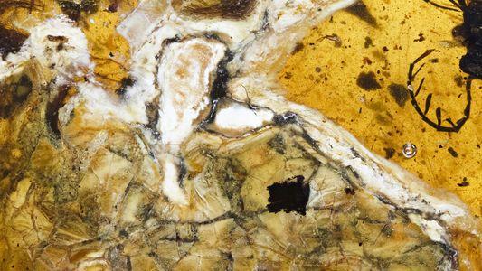Exklusiv: In Bernstein eingeschlossener Vogel aus der Dinosaurierzeit gefunden
