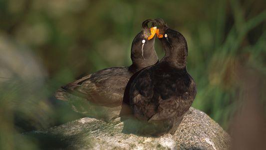 Diese Vögel produzieren ihr eigenes Zitrus-Parfum