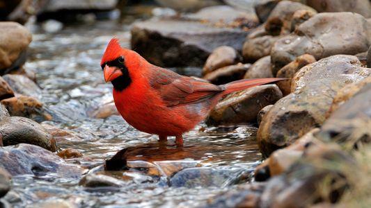 Erklärt: Warum dieser Vogel Fische füttert