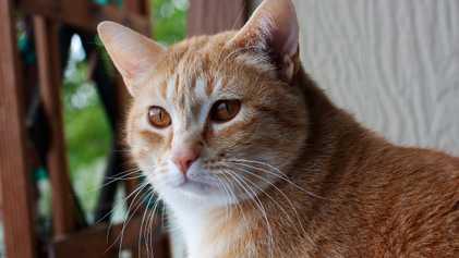 Hören Katzen genauso auf ihre Namen wie Hunde?
