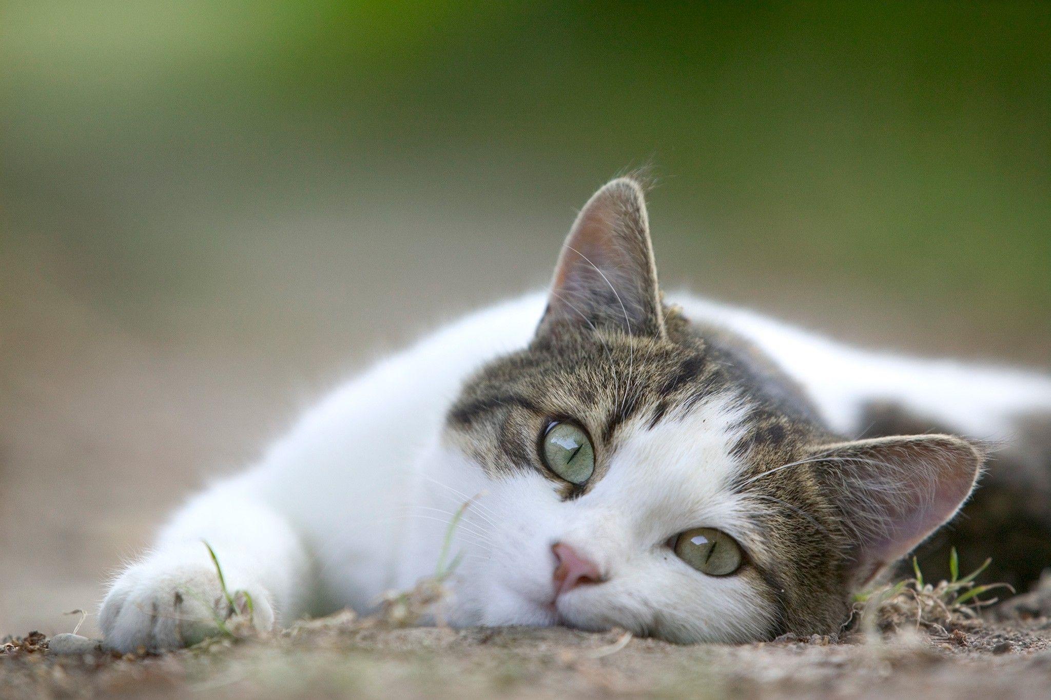 Warum wollen Katzen nicht am Bauch gestreichelt werden?