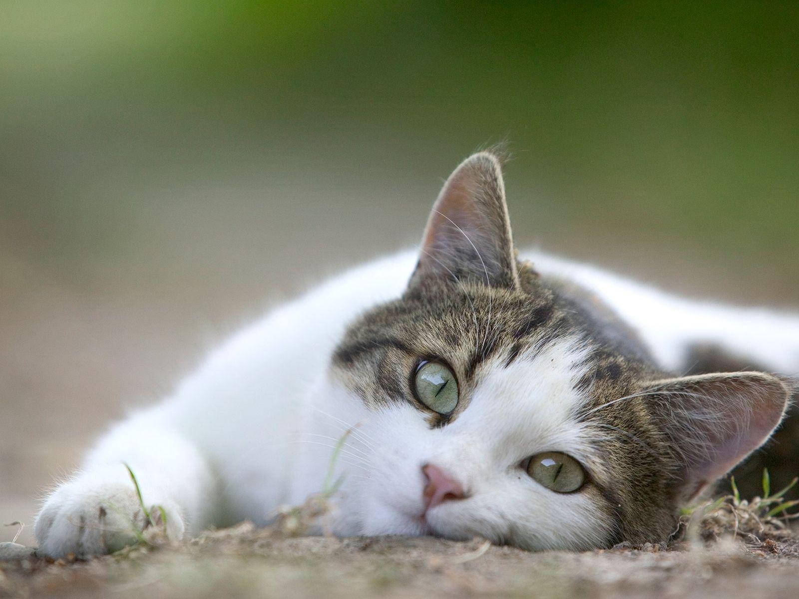 Hauskatzen lassen ihre Halter oft unmissverständlich wissen, was ihnen gefällt und was nicht.