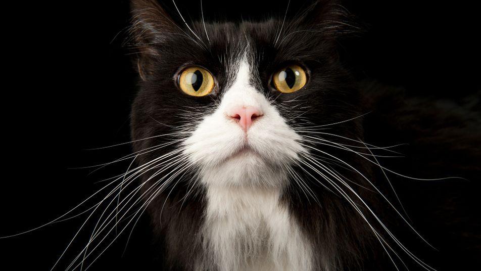 Was der Katzenschwanz uns sagen will