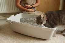 Eine Katze geht während einer Trainingseinheit in eine Transportbox.
