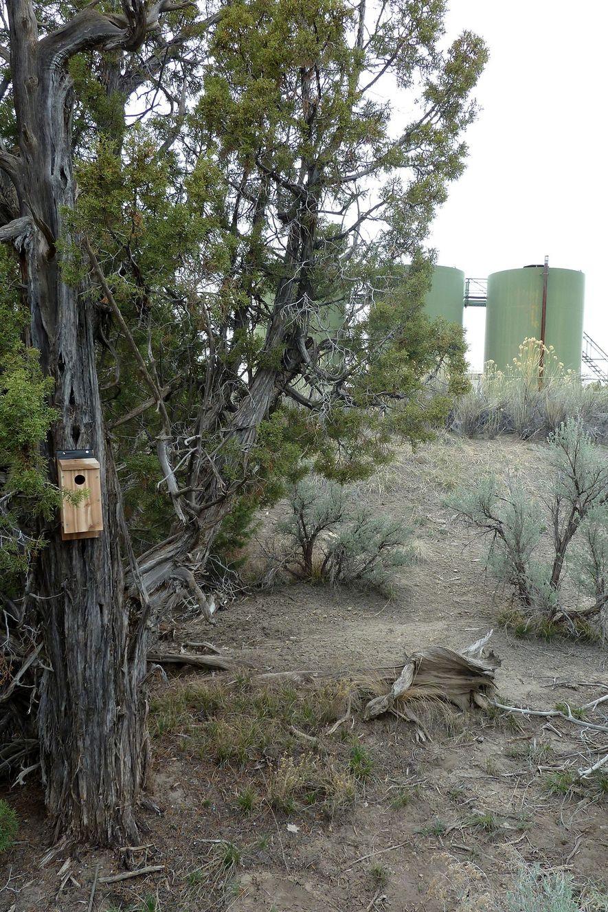 Einige der Nistkästen würden in der Nähe von Öl- und Gasbohranlagen angebracht.