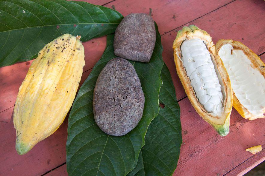 Archäologische Befunde zeigen, dass die alten Zivilisationen des Amazonasbeckens Kakao schon 1.700 Jahre vor den Maya anbauten und verzehrten.