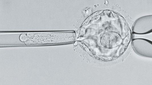 Erste CRISPR-Babys könnten verminderte Lebenserwartung haben