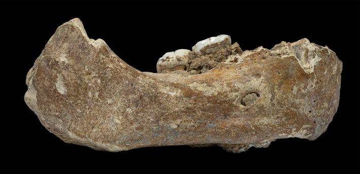 Der neu beschriebene Kieferknochen – der Xiahe-Kiefer, benannt nach dem chinesischen Kreis, in dem er gefunden ...