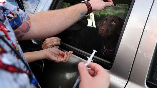 Lösen Hunde die nächste Grippe-Pandemie aus?