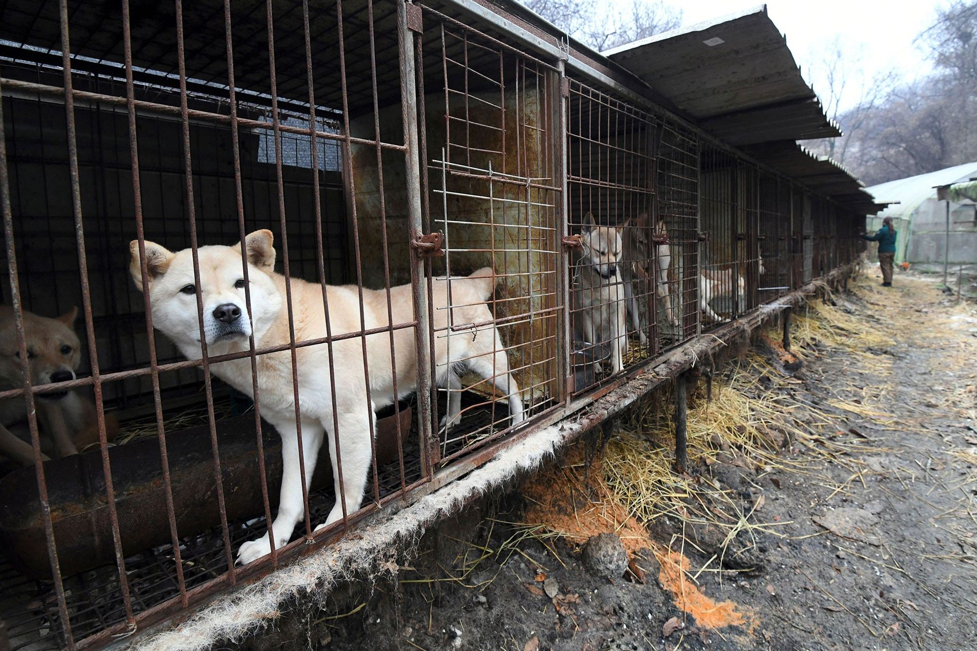 Südkorea verbietet das Töten von Hunden für den Verzehr