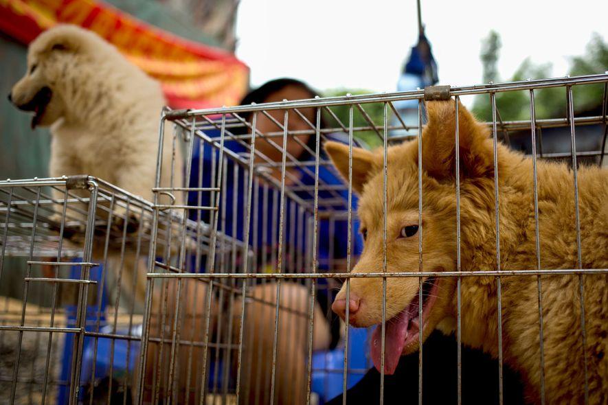 Als erstes asiatisches Land verbietet Taiwan das Essen von Hunden