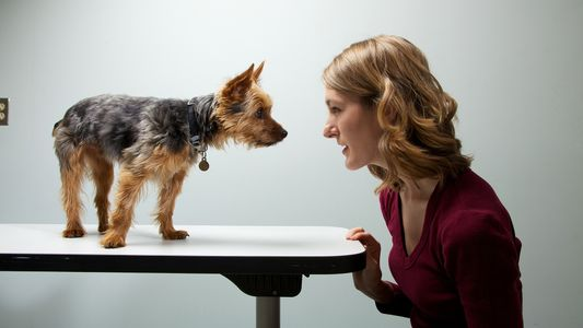 Färben menschliche Persönlichkeiten auf Hunde ab?