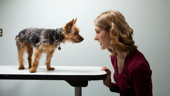 Forscher untersuchten die Persönlichkeiten von 1.681 Haltern und ihren Hunden. Ihr Ergebnis: Hund und Halter verhalten ...