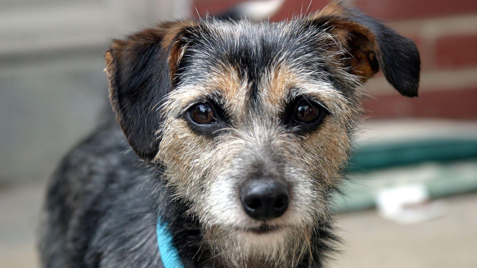 Haushunde und Menschen haben viel gemeinsam – unter anderem leider auch etliche Krankheiten, insbesondere Krebsarten.