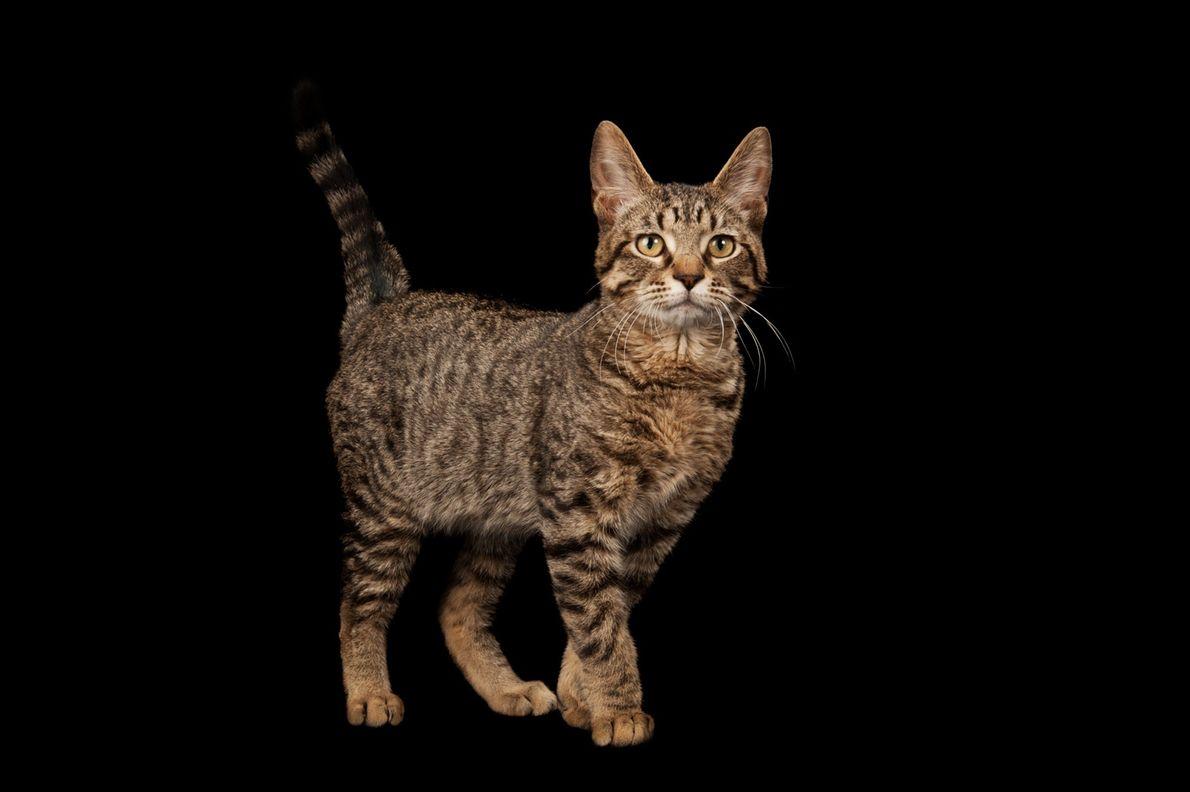 Katzen haben sich selbst domestiziert