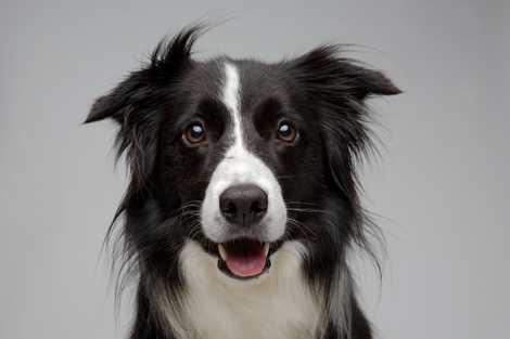 Warum sind Hunde so freundlich? Eine neue Studie gibt Aufschluss