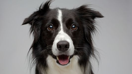 Galerie: Warum sind Hunde so freundlich? Eine neue Studie gibt Aufschluss