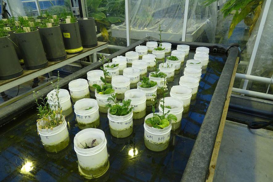 Erste Vermehrung von Regenwürmern in simuliertem Marsboden gelungen